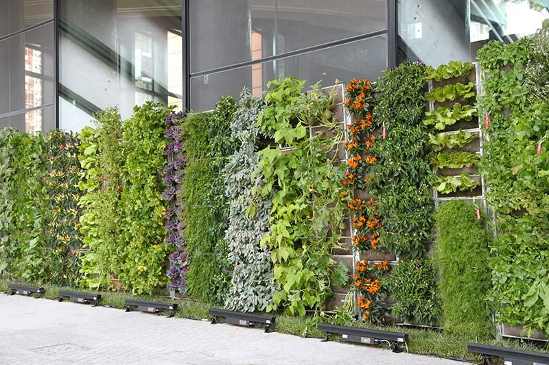 Verde verticale il giardiniere terrazzi irrigazione - Irrigazione balcone ...
